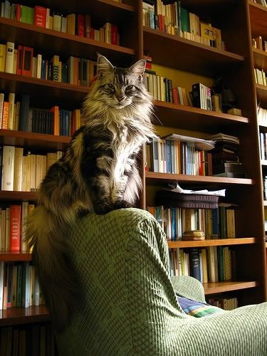 (via Book Stuff / kitty in the library) she probably has read all the books and has a bored look like now what??