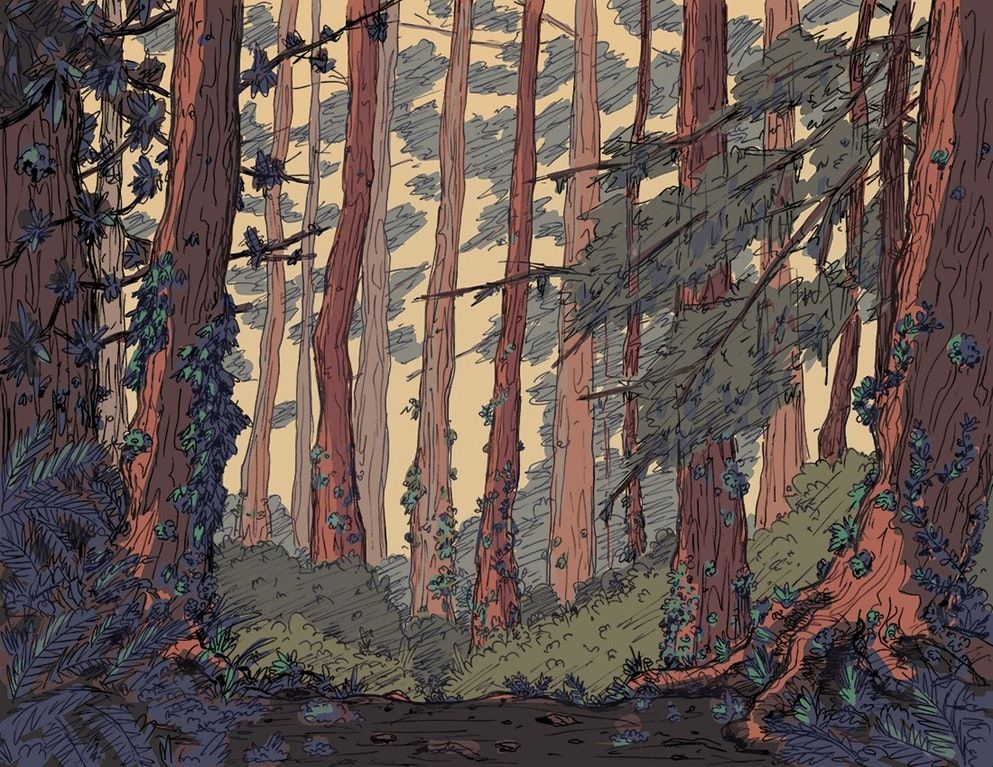 A Forest Background For A Project I M Working On Drawing