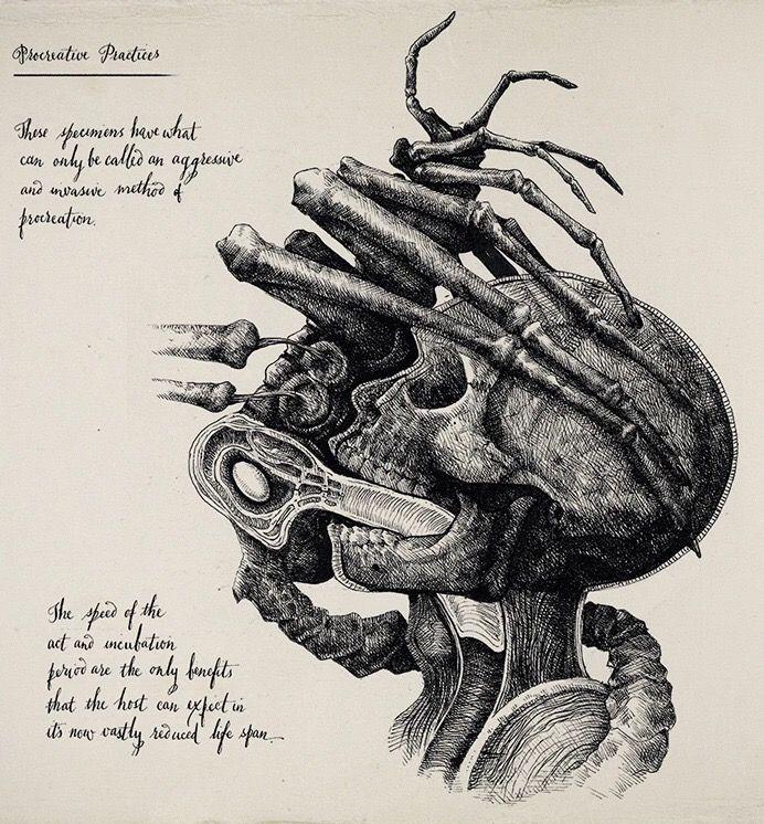 Pin de Antonio Aalc en Xenomorfo Giger art | Pinterest | Anatomía ...