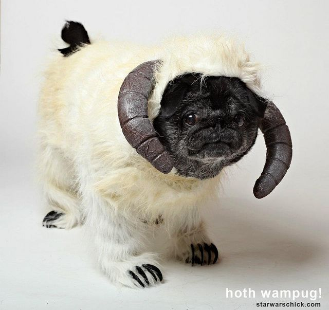 5 Awesome Star Wars Dog Costumes Pugs In Costume War Dogs Pugs