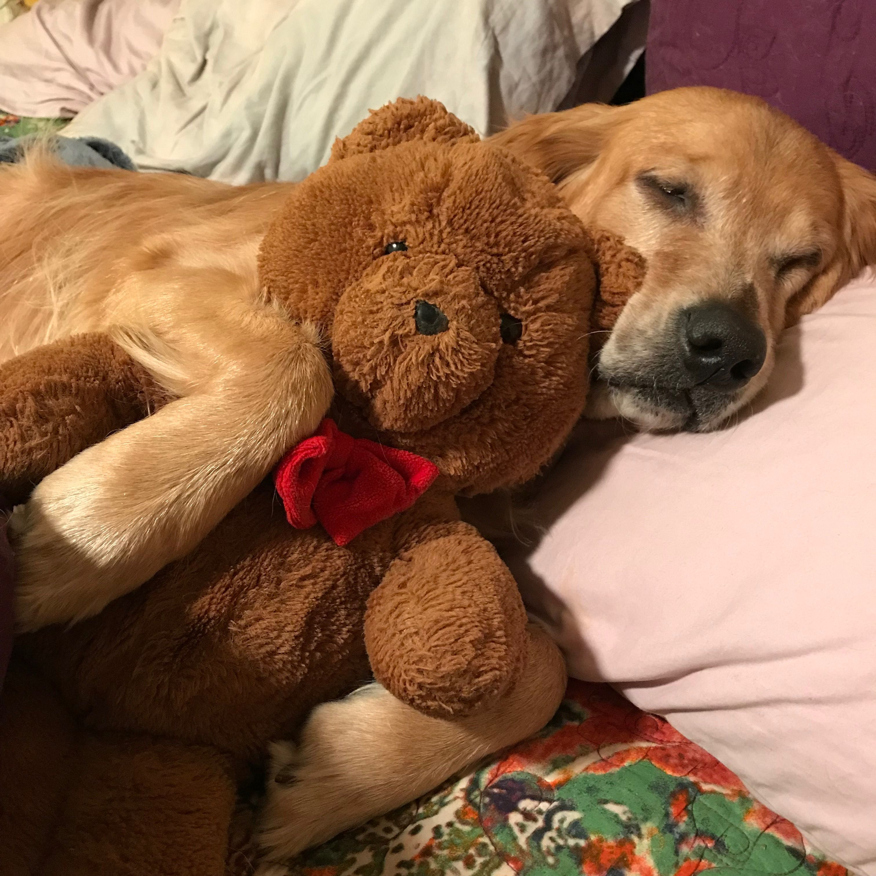 Everypup needs some beary to love. 🐕 ️ 🐻 earl Cute