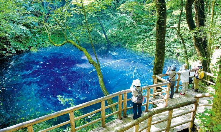 青森縣世界自然遺產白神山地 十二湖 青池 十二湖 青森 絶景