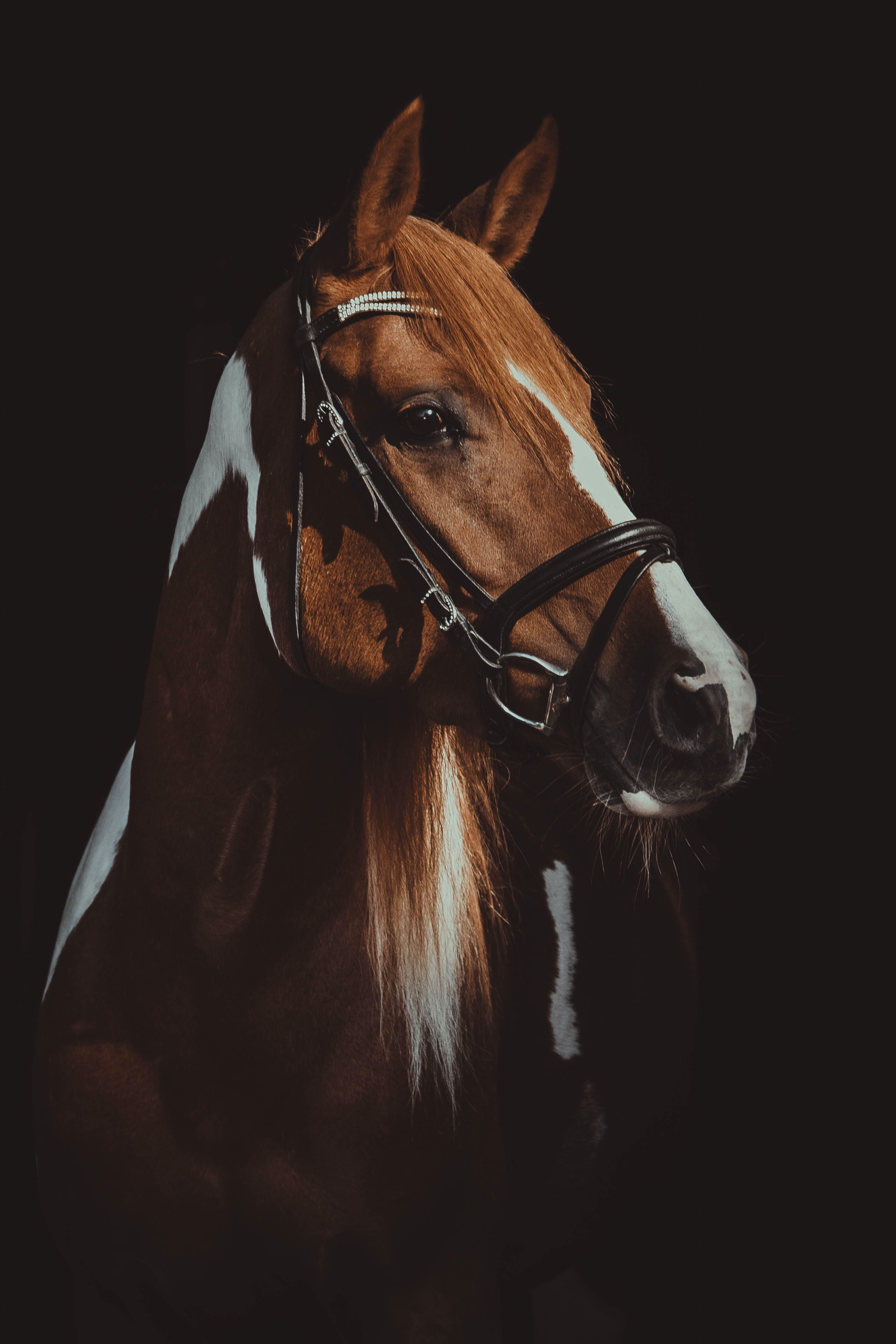 5 Signs Your Horse Is Happy In 2020 Horses Horse Portrait Brown And White Horse