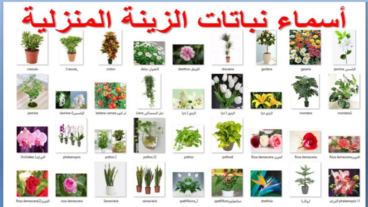 أسماء نباتات الزينة المنزلية Youtube Indoor Trees Table Decorations Decor