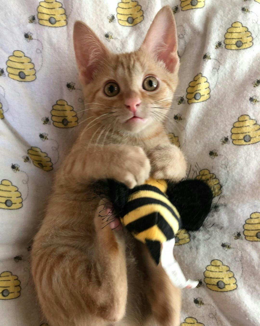Pin By Cute Creatures On Cute Cats In 2020 Cute Cats Cat Behavior Fluffy Cat
