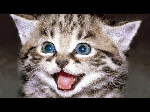 Happy Meow Cats Meowing Meowing Cat Videos Cats Meow Kittens