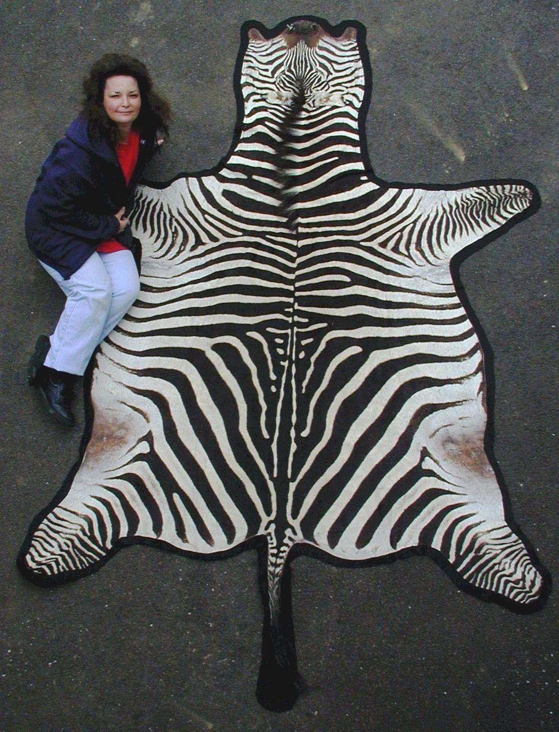 Zebra Skin Rug Rugs Room
