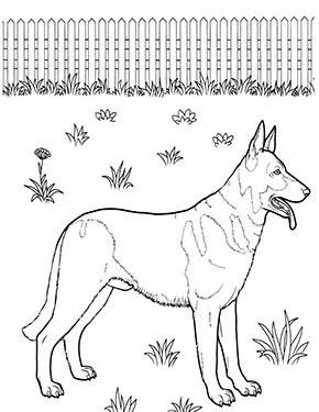 Ausmalbild Schaferhund Zum Kostenlosen Ausdrucken Und Ausmalen