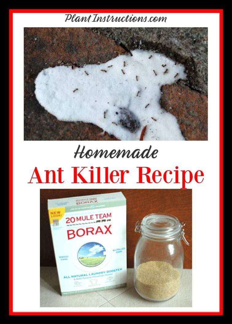 Pin On Ant Killer Recipe