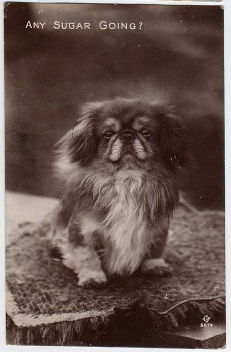 Pin By Angela King On Vintage Dogs With Images Vintage Dog Dogs Animal Pictures