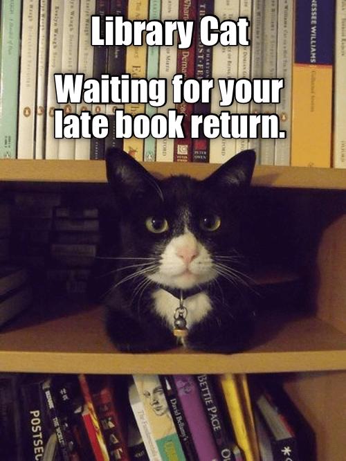 Top 25 Memes Of The Week Cheezburger Users Edition 121 Funny Cat Memes Best Cat Memes Cat Memes