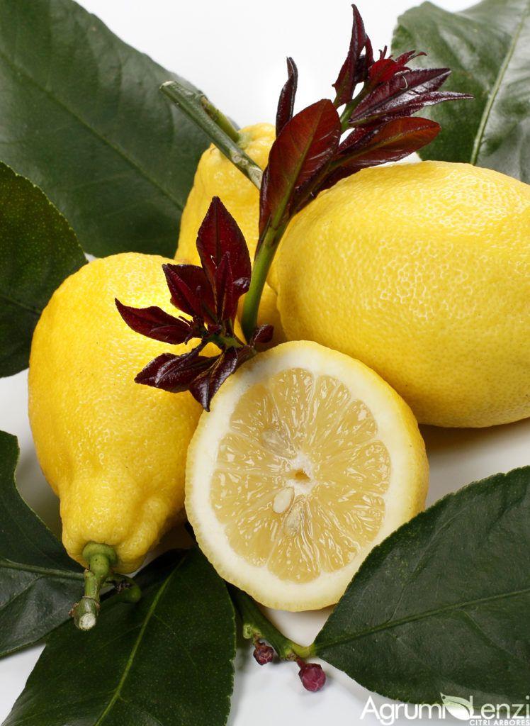 Photo of Carrubaro lemon (Citrus limon)