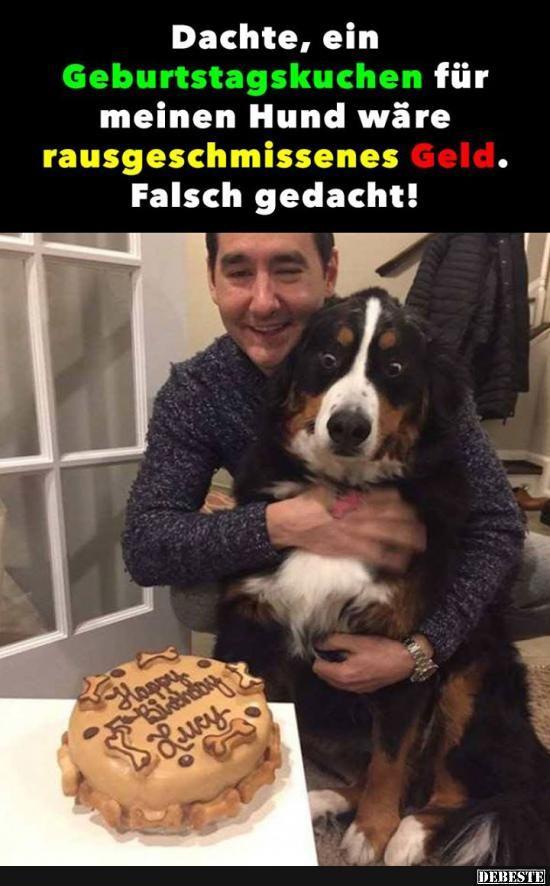 Photo of Pensé que un pastel de cumpleaños para mi perro sería …