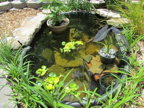 M rtelk bel miniteich im garten anlegen bepflanzen tarnen garten garten teich und garten ideen - Wasserteich im garten ...