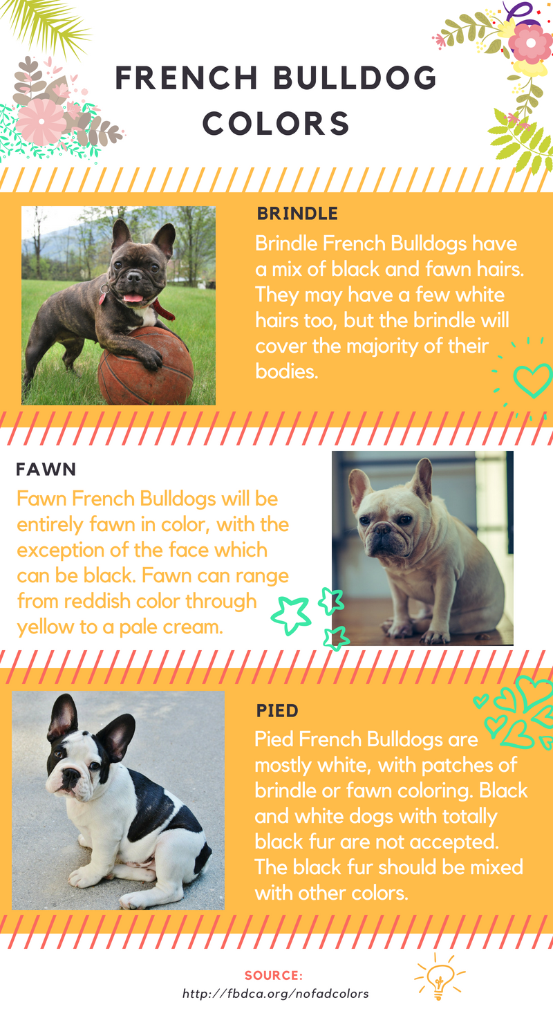 All About French Bulldog Colors French Bulldog Brindle French Bulldog Fawn French Bulldog