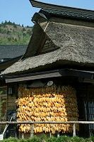Thatched roof farmhouses