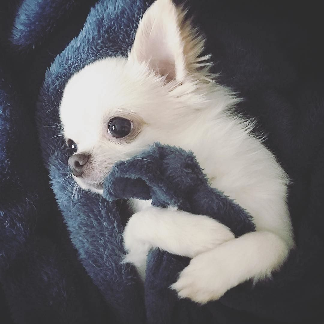 Pin By Chrissykay On So Cute In 2020 Cute Baby Animals Cute