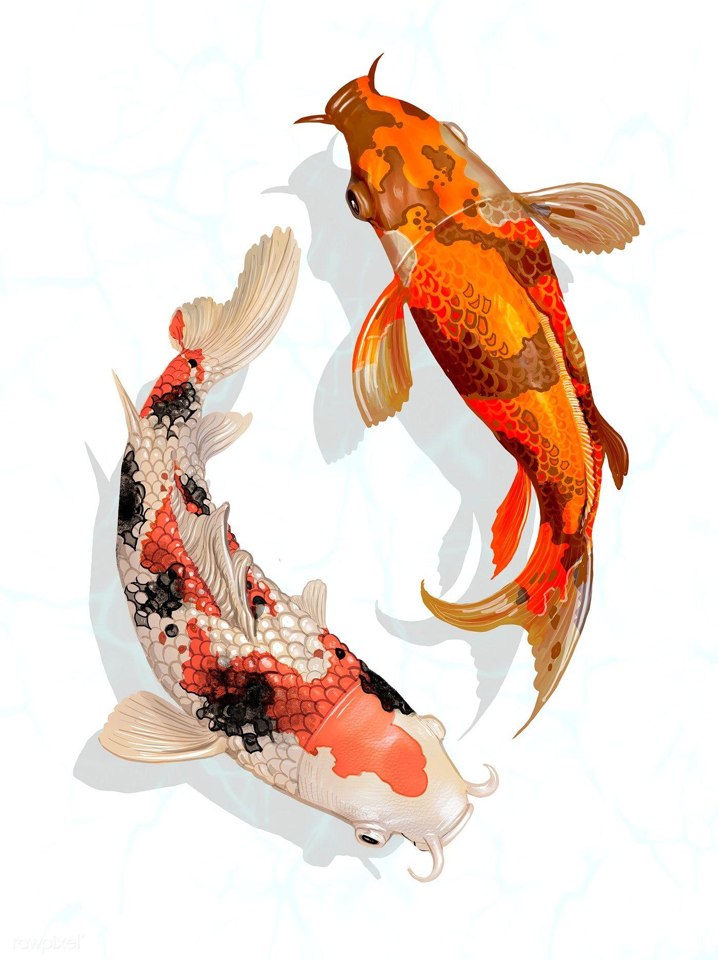 Карп японский картинка