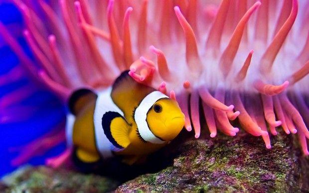 Hidden life under the sea depth   World's Most Beautiful