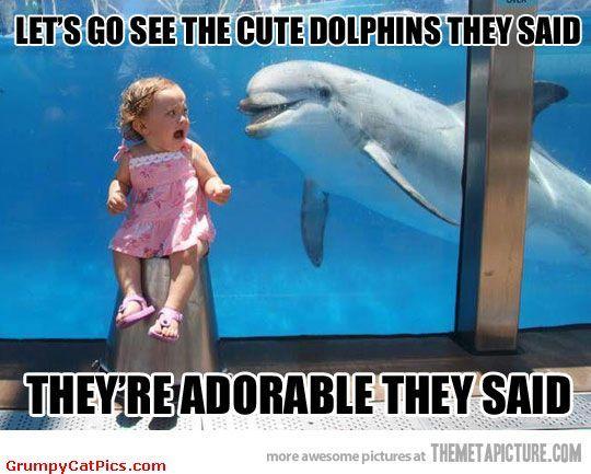 Funny Meme Picture Captions : Funny animal captions part pics amazing creatures