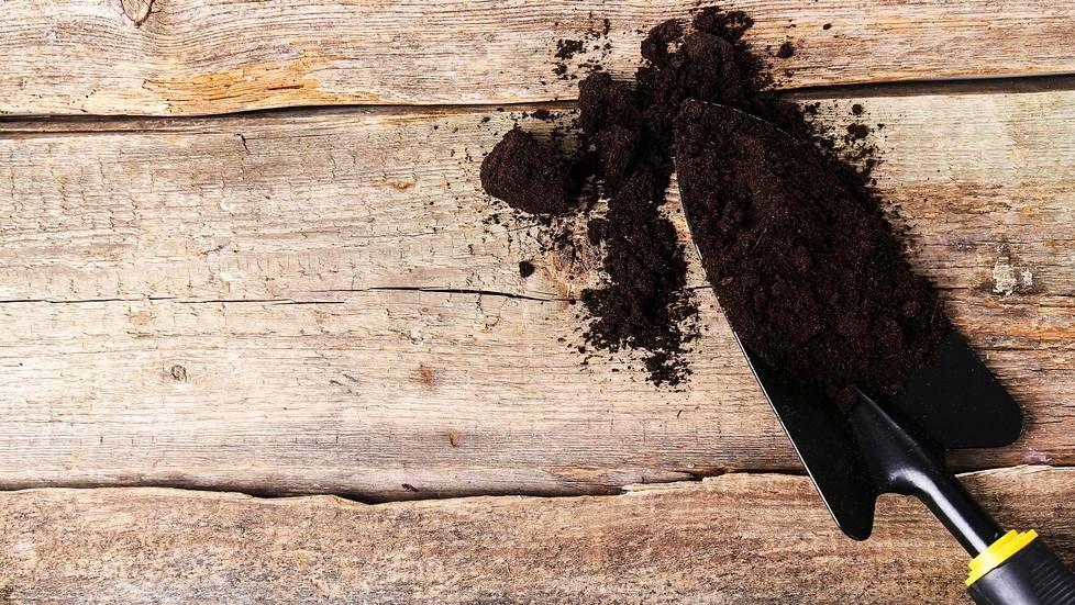 """Väärä istutussyvyys kukkasipuleiden yleisin istutusvirhe: """"Liian pinnassa olevat sipulit kukkivat heikosti"""""""