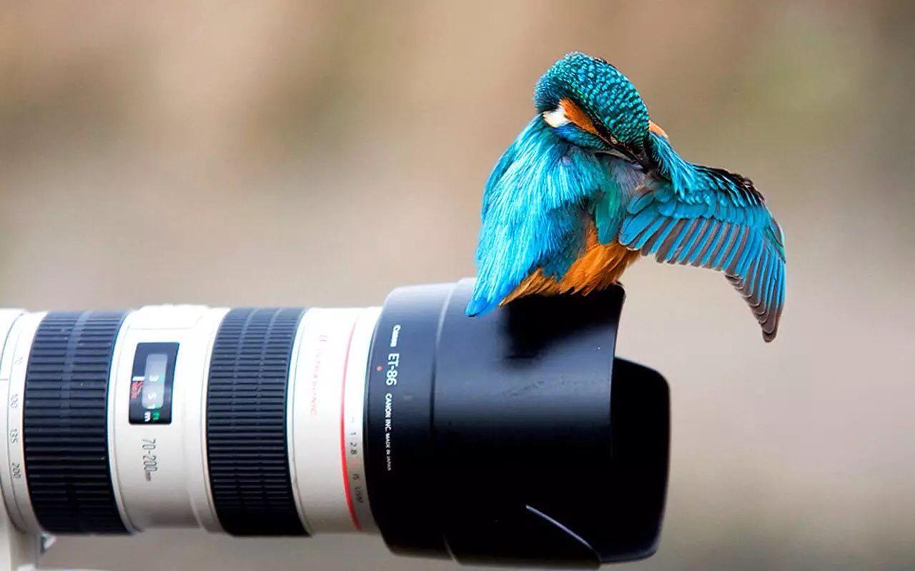 Really cool Irish kingfisher Amazing animal pictures