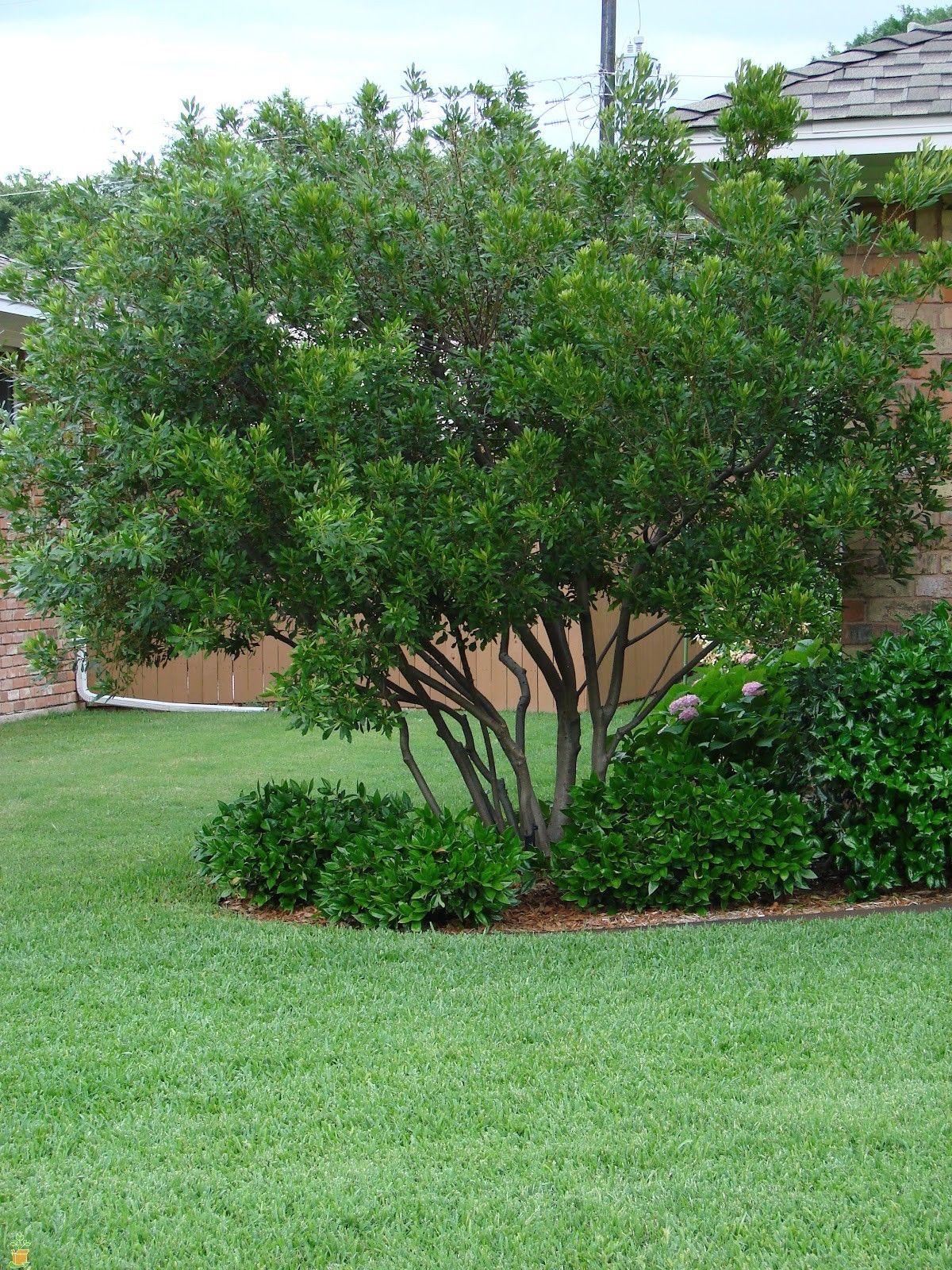 wax myrtle tree wildlife habitat