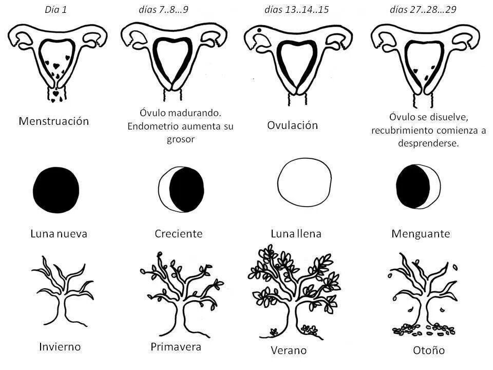 Luna y ciclos