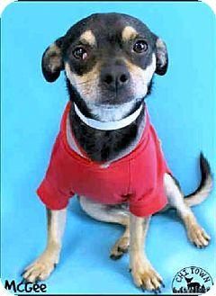 Phoenix Az Pug Chihuahua Mix Meet Mcgee A Dog For Adoption