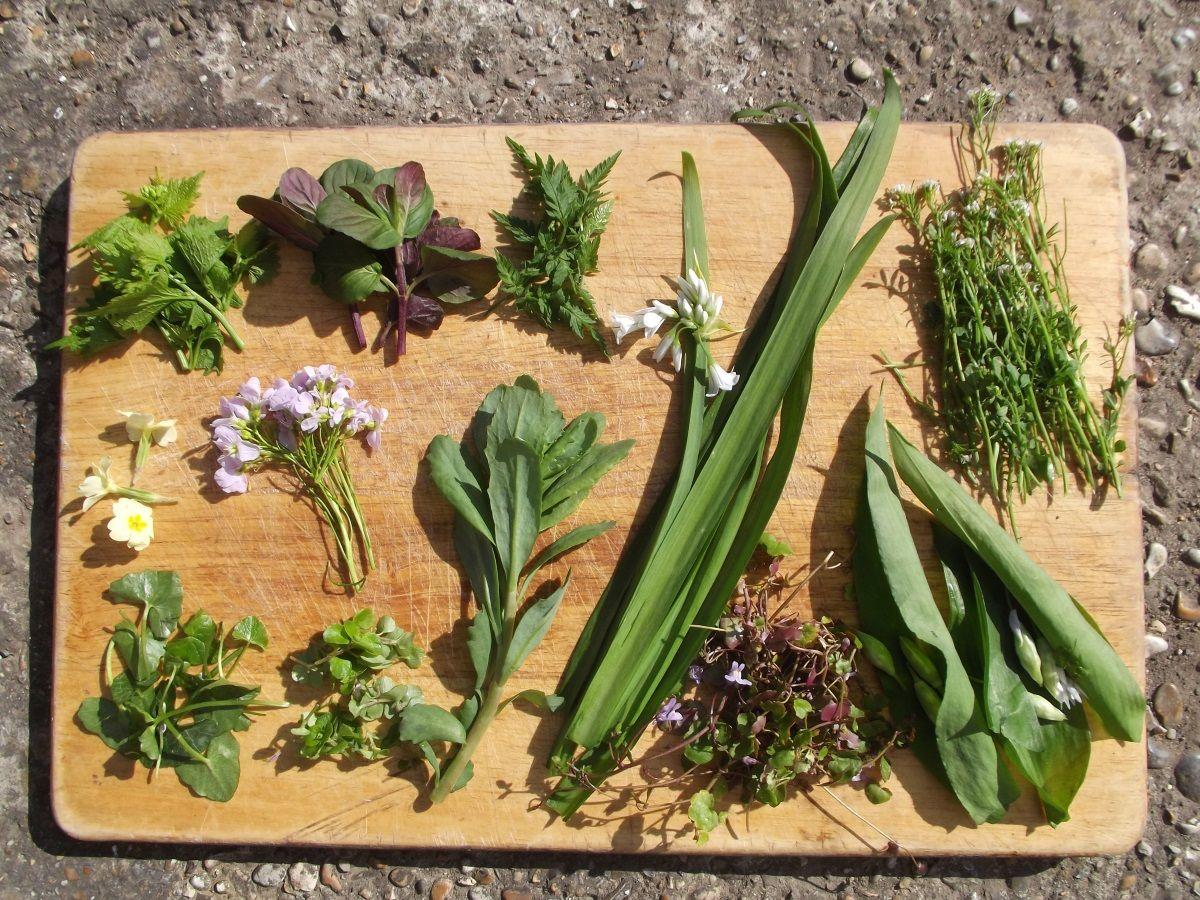 Image result for foraging uk foraged food foraging