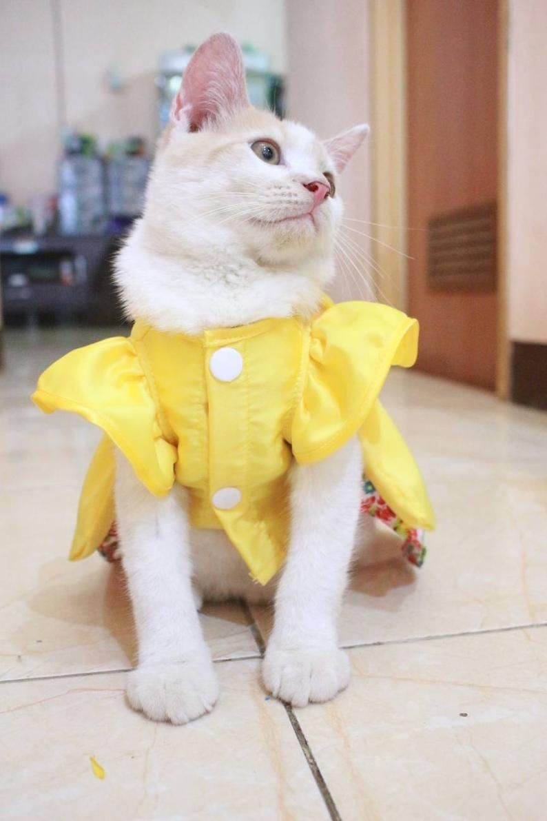 Dress For Cat Korean Style Dress Outfit For Persian Cat Sphynx Cat Clothing Simple Cat Clothes In 2020 Cat Clothes Pet Clothes Patterns Kitten Clothes