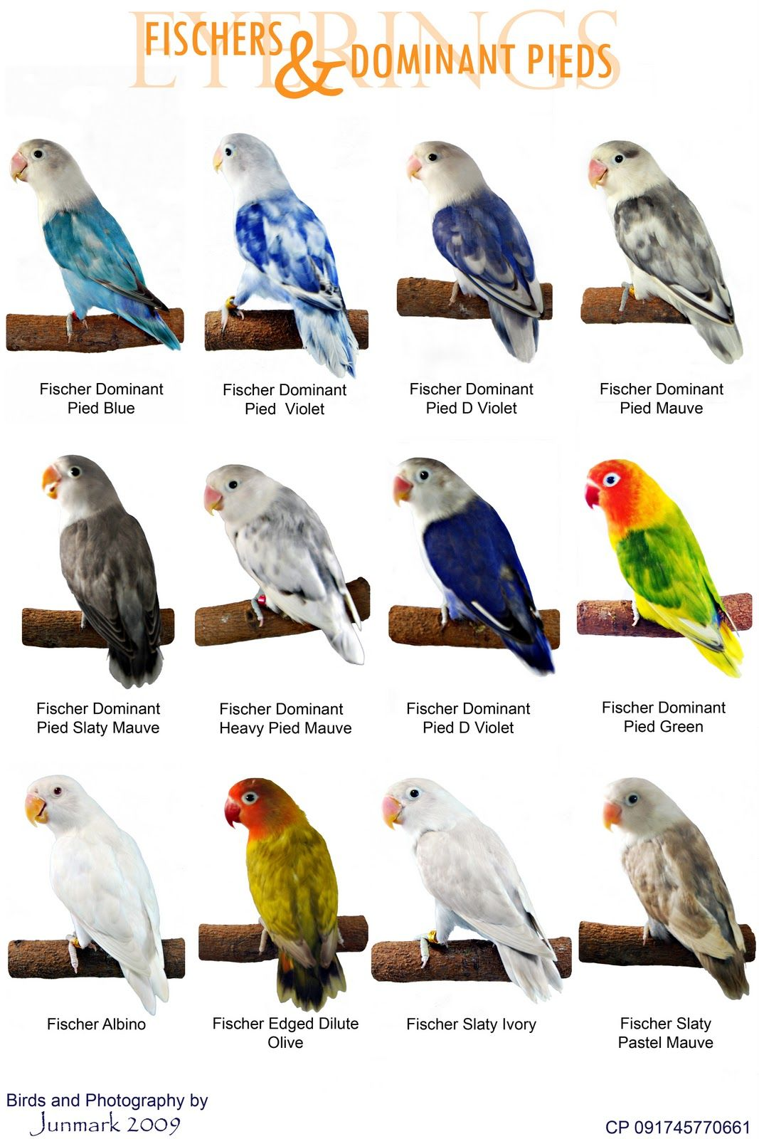 Different types of Cockatoos. I would love to have a Goffin ...