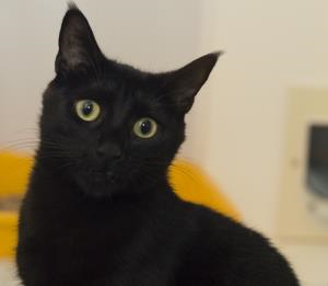Stunning Black Cat Queenie Has Had Kittens Who All Found Homes Very Quickly Sadly Queenie Has Not Been So Lucky She S One Of Brid Cat Adoption Cats Adoption