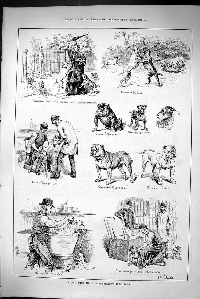 Antique Print of Sporting Dramatic News 1885 Pybus-Sellon Bull Dogs King Cole Ro