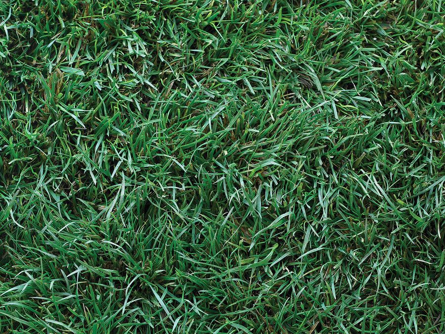 Should You Fake The Lawn?