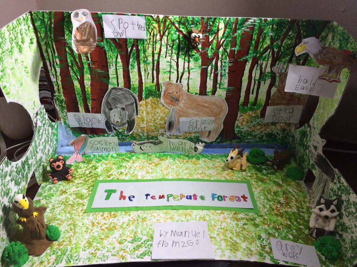 Kids Diorama With Details: Temperate Forest Diorama