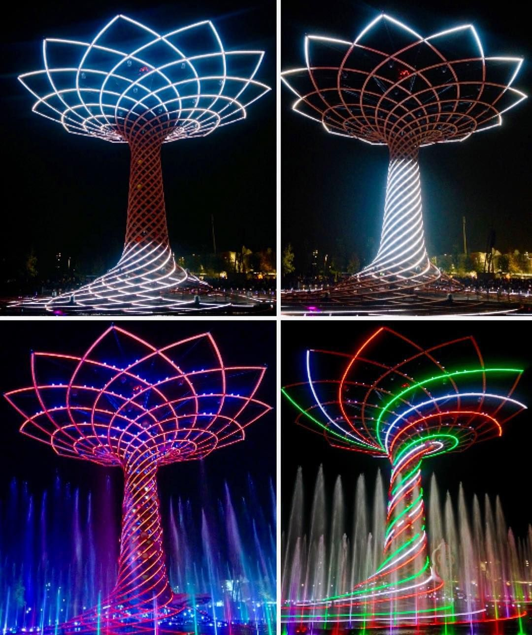 Così vario l'albero della vita / Такое разное дерево жизни  by nataly_rigvava