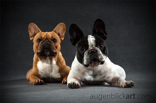 Jenny Und Luna Franzosische Bulldoggen Animal Photo Pets Animals