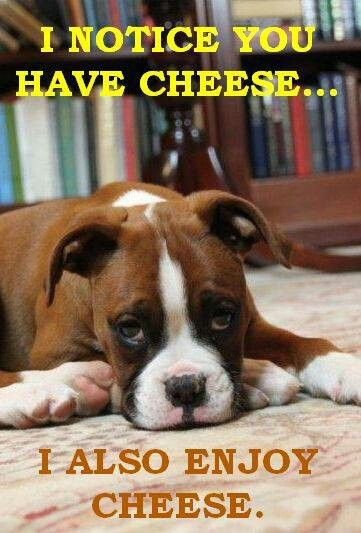 Pin By Maria Rodriguez On Dogs Boxer Dogs Boxer Memes Funny Dogs