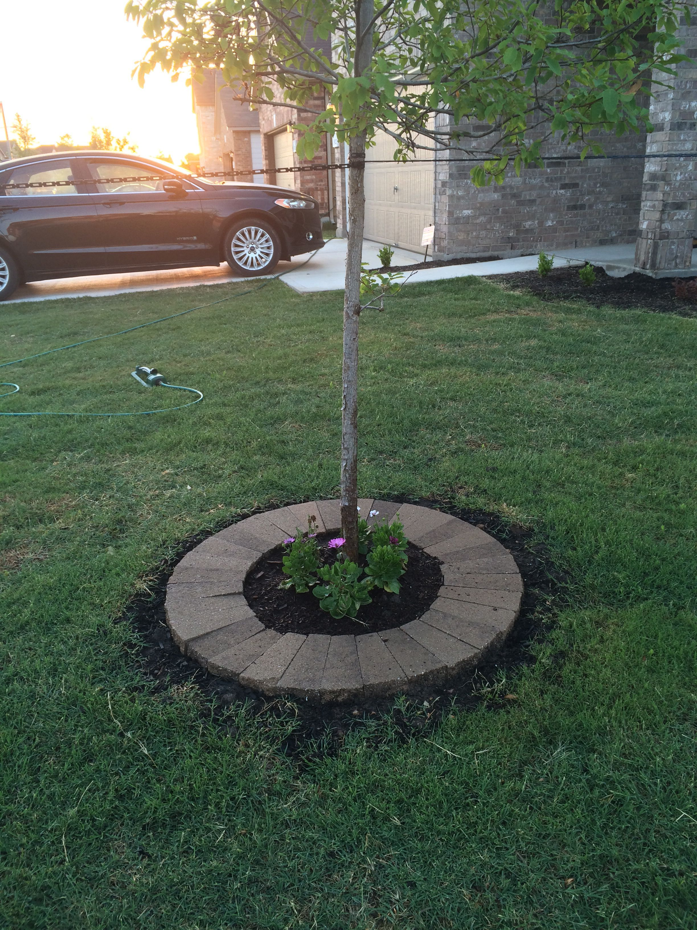 New Stone Tree Rings Installed Allie S