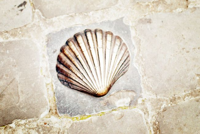 St Jacobs Shell (metal) on cobblestone in Bruges, Belgium. Symbol of the crusade to Santiago De Compostela, Spain.