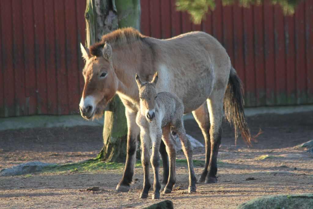 Mother and her newborn foal