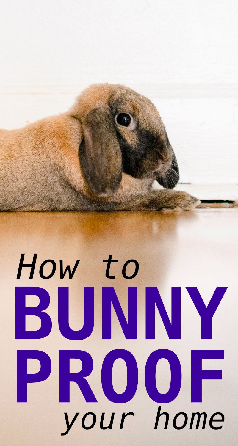 The Complete Guide To Bunny Proof Your Home Pet Bunny Bunny Care Bunny