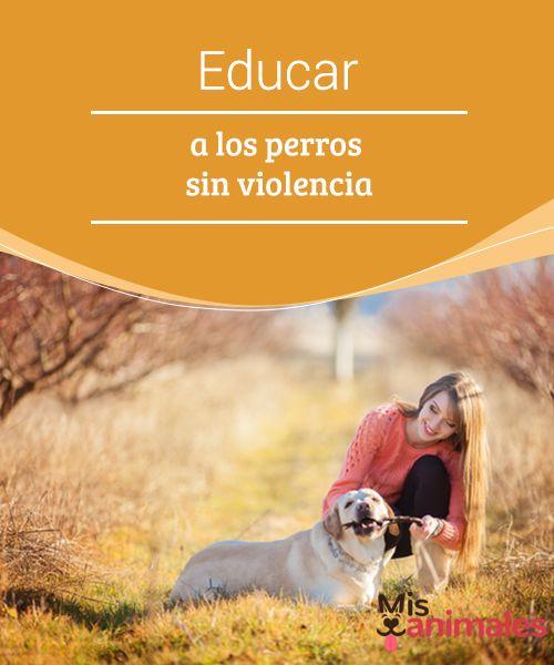 Educar A Los Perros Sin Violencia Perros Cuidar Animales Y