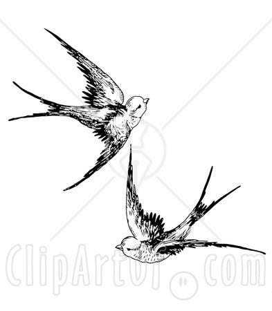 Swallows Dessins Faciles Dessin Tatouage