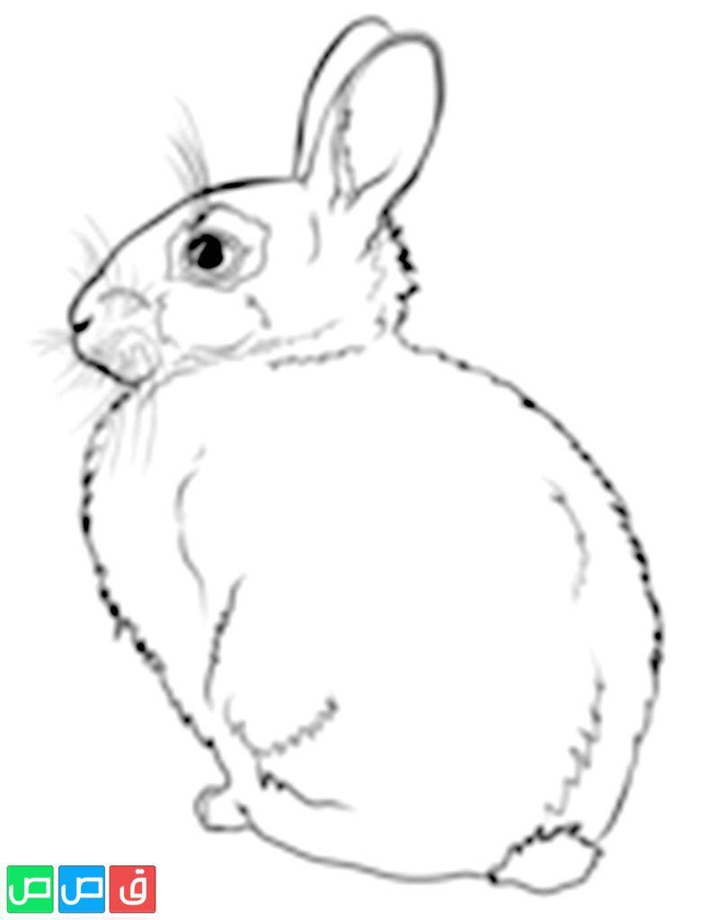 رسم ارنب للتلوين Coloring Pages Bunny Coloring Pages Rabbit Colors