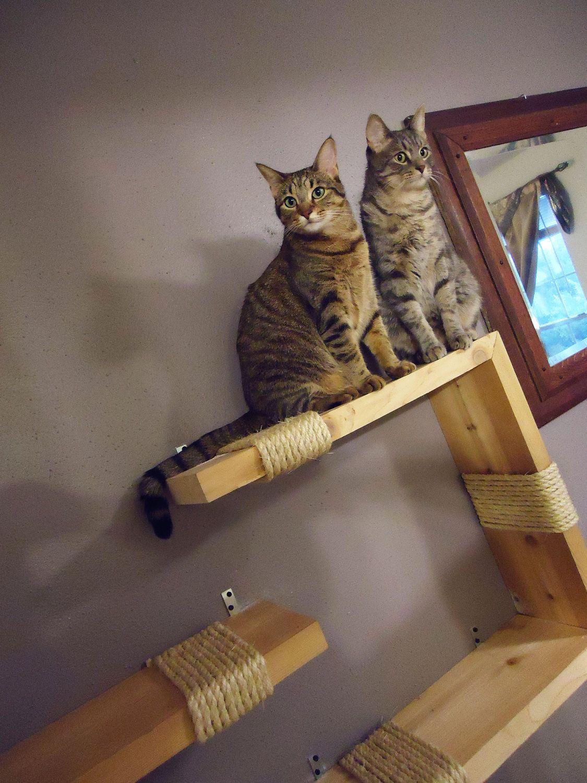 Interactive Pet Wall Art Natural Pine Perpendicular
