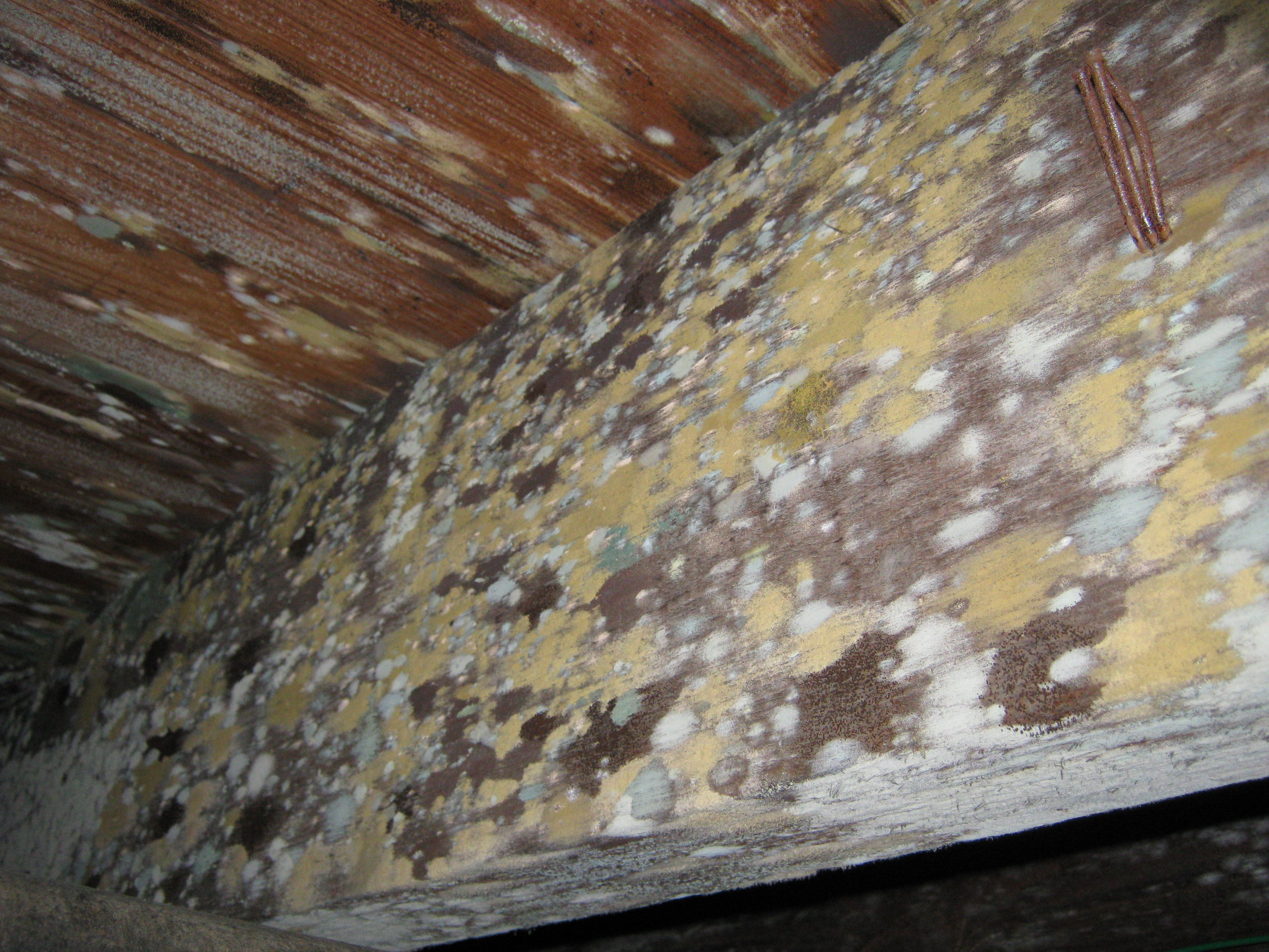 The 6 Most Common Causes For Attic Mold Growth Mold Remover Mold Remediation Bathroom Ceiling