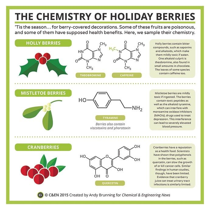 Science Facts Christmas: Dec. 8th. The Chemistry Of Holiday Berries!