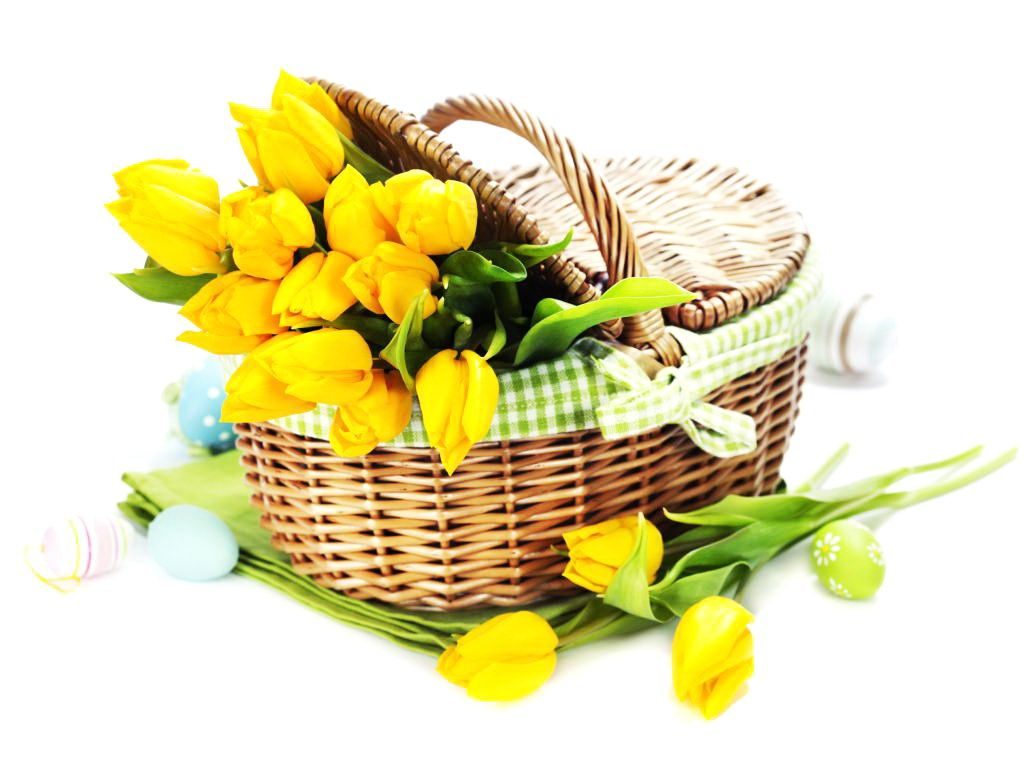 YELLOW TULIPS FLOWERS IMAGES | Beautiful Yellow Tulip Flowers In ...